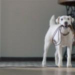 Pas i VW: Ko bolje zvuči
