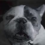 Pametne kuće – Šta rade životinje – AT&T – Digital life