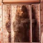 "Simpatične #selfie slike ""slatkih"" životinja  – National Geographic"