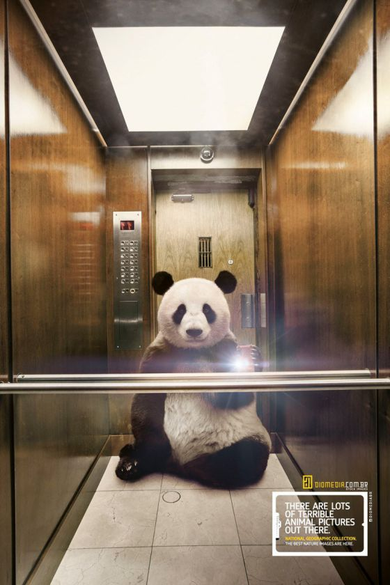 National Geographic - panda selfie