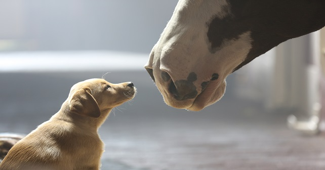 budweiser_puppy_love